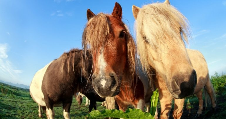Therapy Ponies