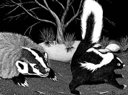 skunks and badgers