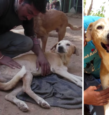 AAU saves stray dog with spinal injury.