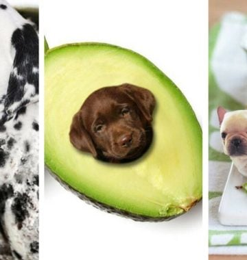 dogs in food