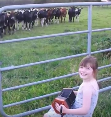 girl plays music to cows