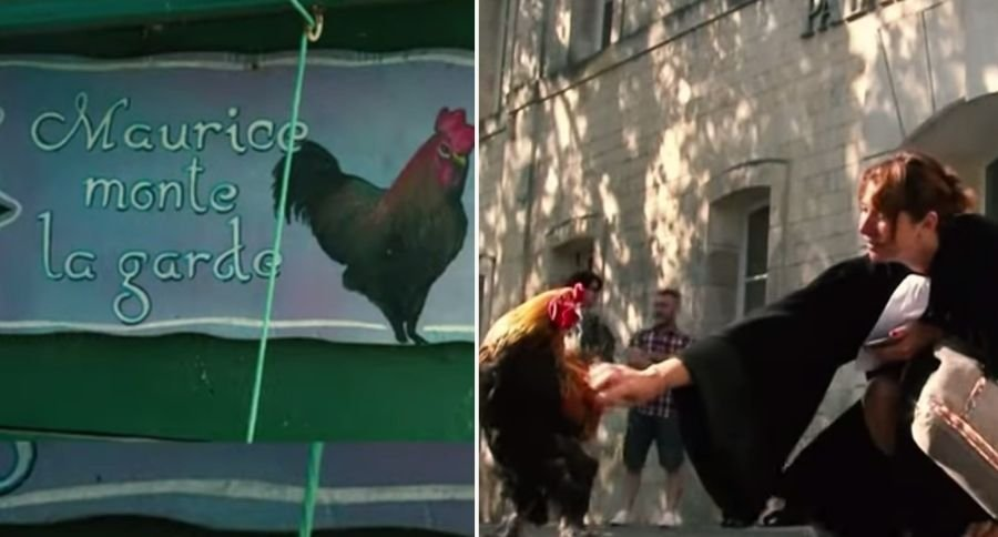 Rooster Wins Court Case