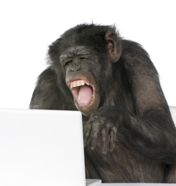Monkey laughs while on his computer