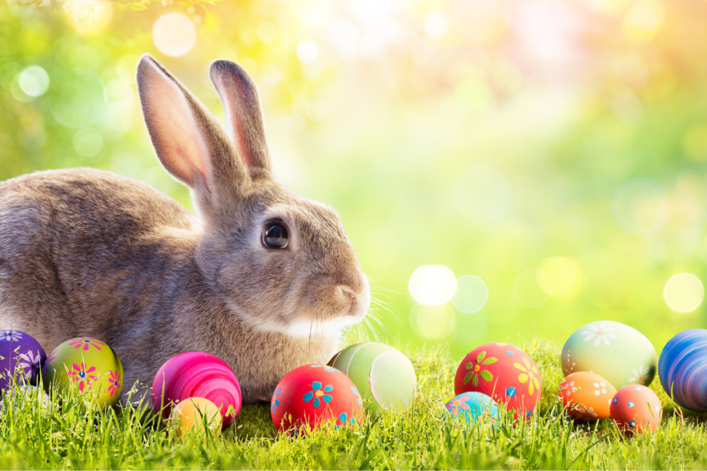 Rabbit hops through some Easter eggs.